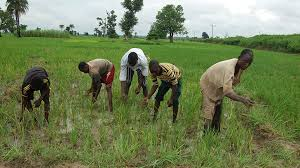 CBN to fund 1.6m farmers Across Nigeria (See Details)