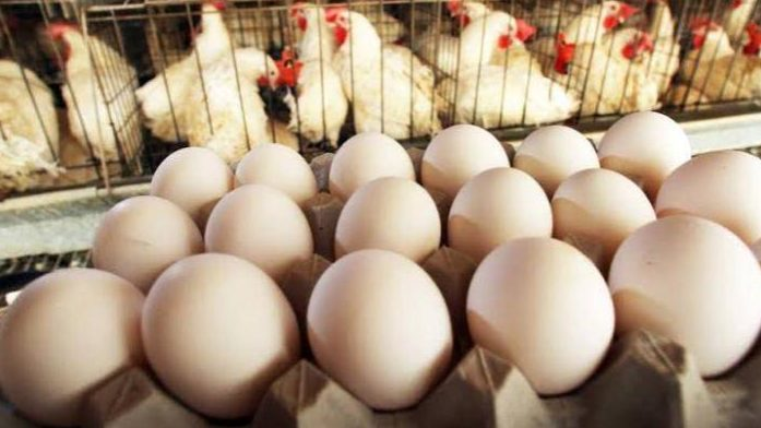 Stop Throwing Away Your Egg Shells; See How You Can Make Money From It