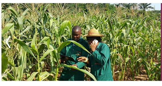 Apply for International Innovation Award for Sustainable Food and Agriculture Application 2021